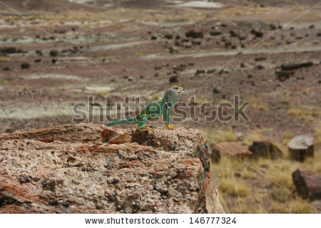 Eastern Collared Lizard clipart #3, Download drawings