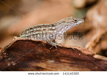 Eastern Fence Lizard clipart #18, Download drawings