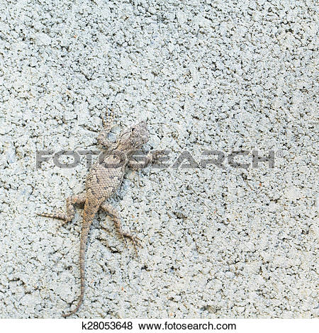 Eastern Fence Lizard clipart #11, Download drawings