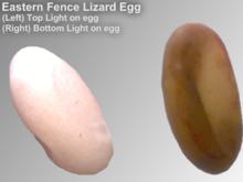 Western Fence Lizard svg #11, Download drawings