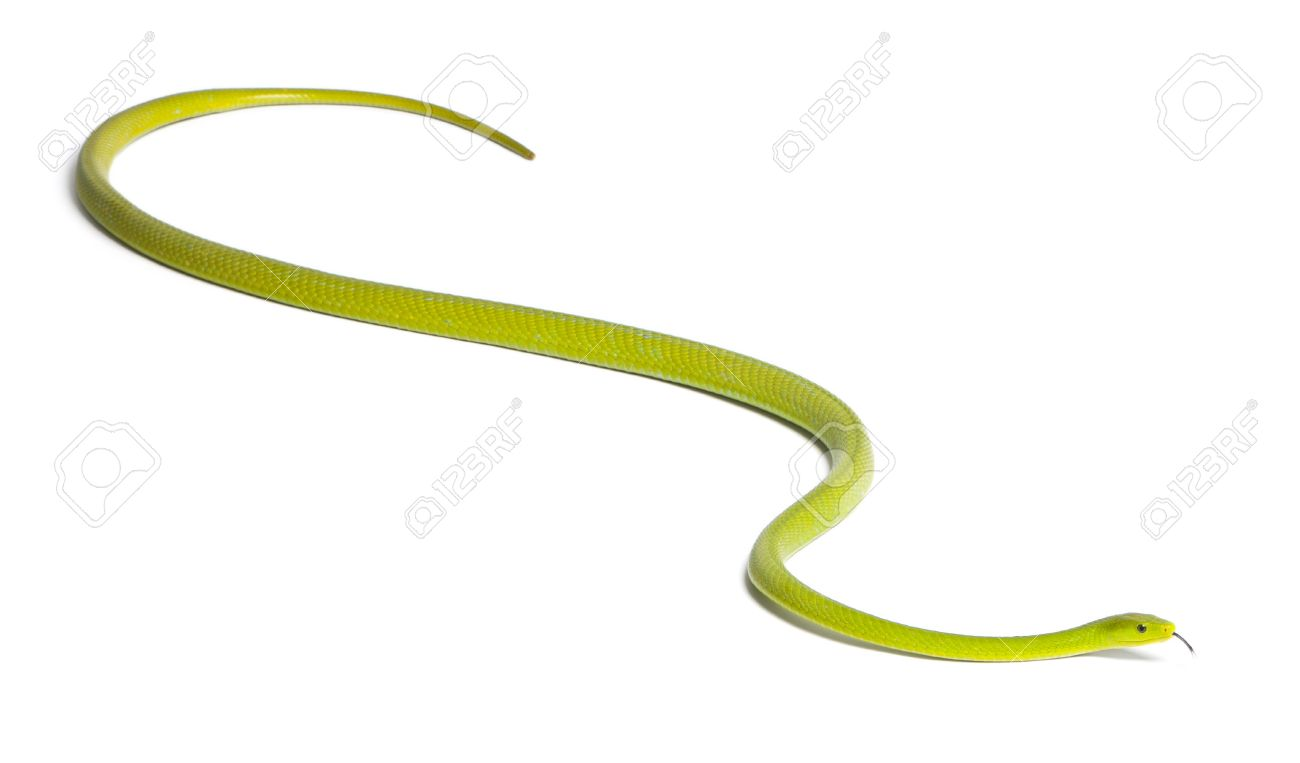 Eastern Green Mamba clipart #2, Download drawings