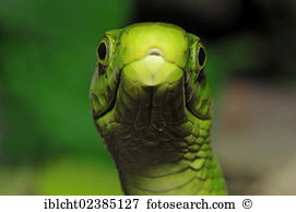Eastern Green Mamba clipart #12, Download drawings