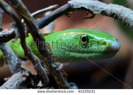 Eastern Green Mamba clipart #4, Download drawings