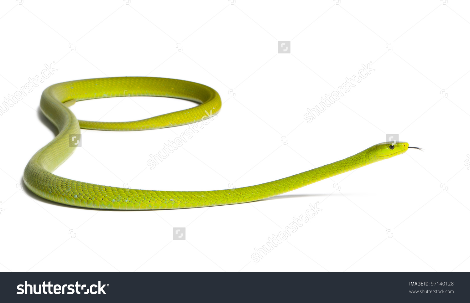 Eastern Green Mamba clipart #1, Download drawings