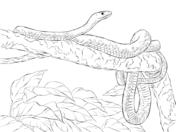 Eastern Green Mamba coloring #10, Download drawings