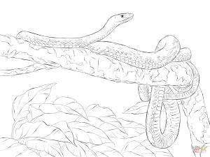 Eastern Green Mamba coloring #2, Download drawings