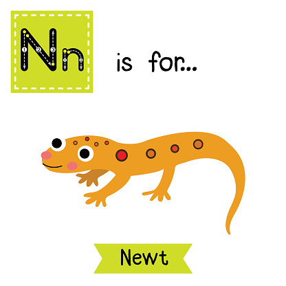 Eastern Newt  clipart #17, Download drawings
