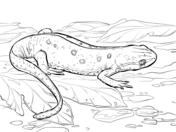 Newt coloring #1, Download drawings