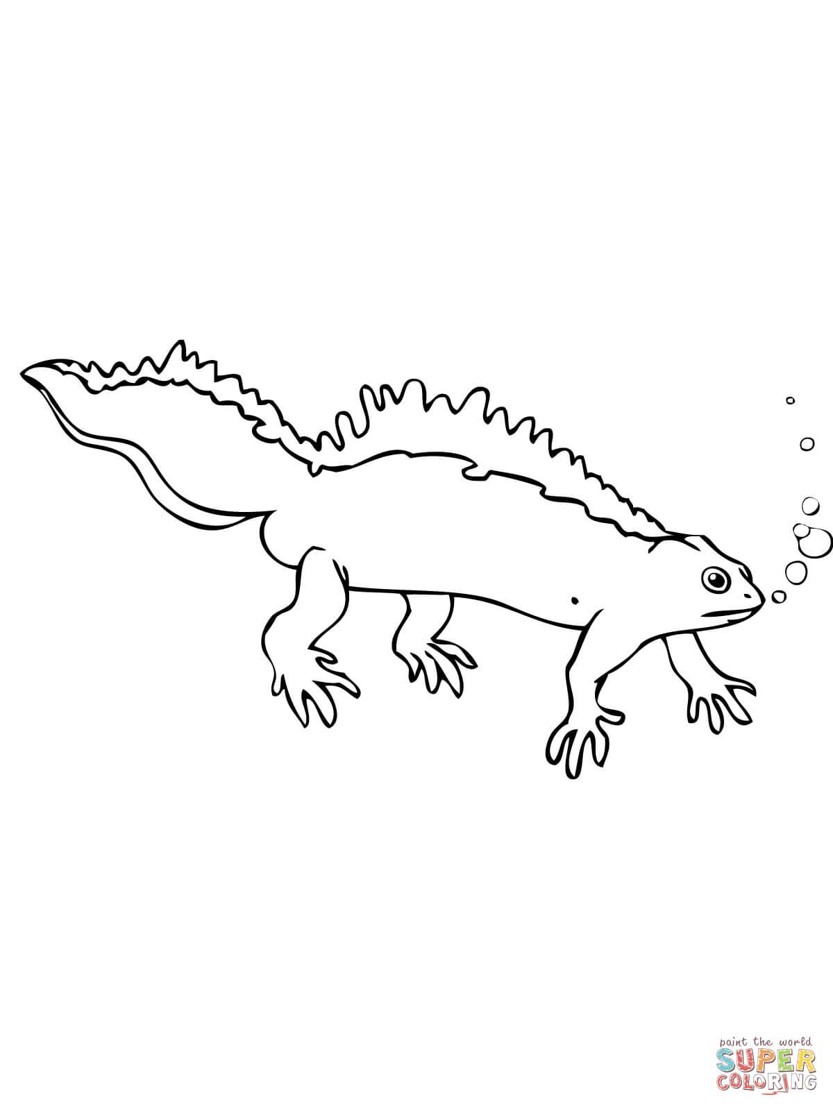 Newt coloring #18, Download drawings
