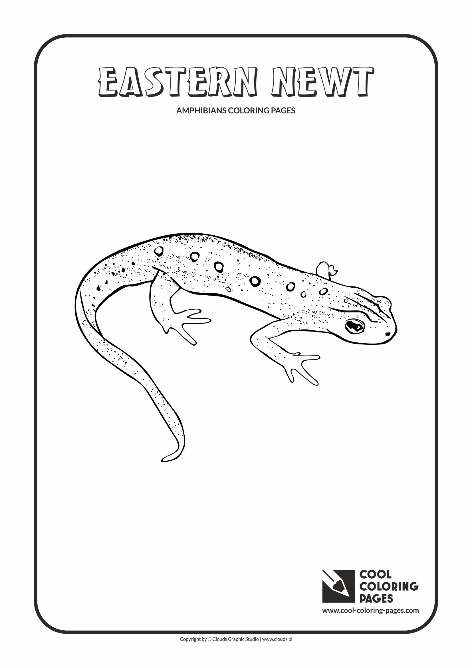 Eastern Newt  coloring #2, Download drawings