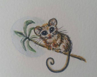 Eastern Pygmy Possum clipart #13, Download drawings