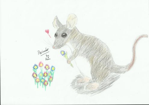 Eastern Pygmy Possum clipart #14, Download drawings