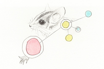Eastern Pygmy Possum clipart #2, Download drawings