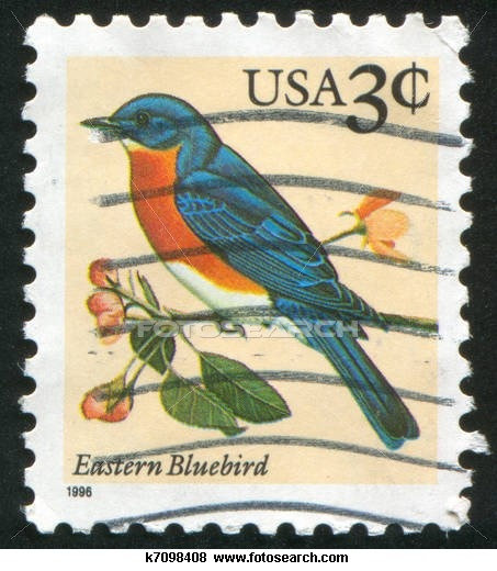 Eastern Tanager clipart #3, Download drawings