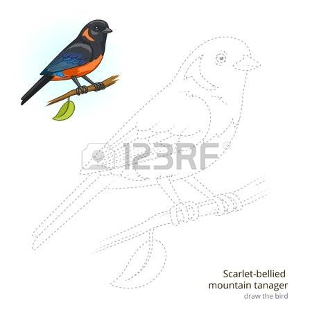 Eastern Tanager clipart #15, Download drawings