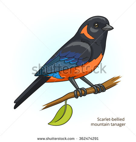 Eastern Tanager clipart #17, Download drawings
