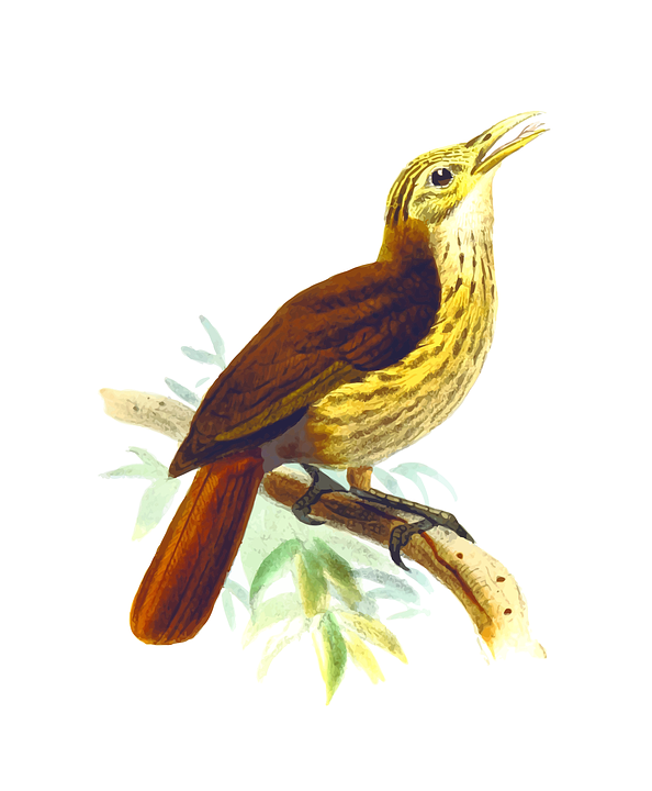 Eastern Tanager svg #1, Download drawings