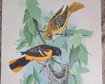 Eastern Tanager svg #3, Download drawings