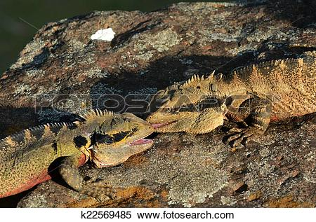 Eastern Water Dragon clipart #18, Download drawings