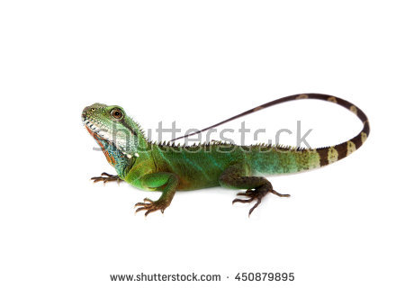Eastern Water Dragon clipart #15, Download drawings