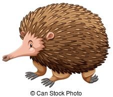 Echidna clipart #17, Download drawings