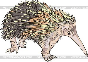 Echidna clipart #1, Download drawings
