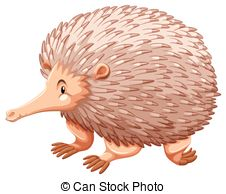 Echidna clipart #20, Download drawings