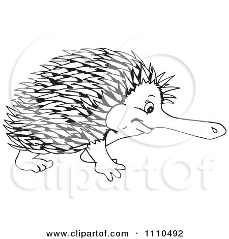 Echidna clipart #8, Download drawings