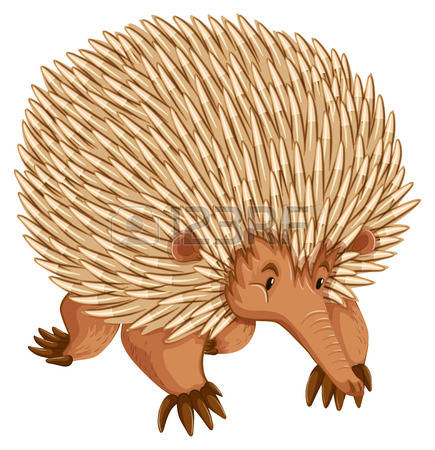 Echidna clipart #19, Download drawings