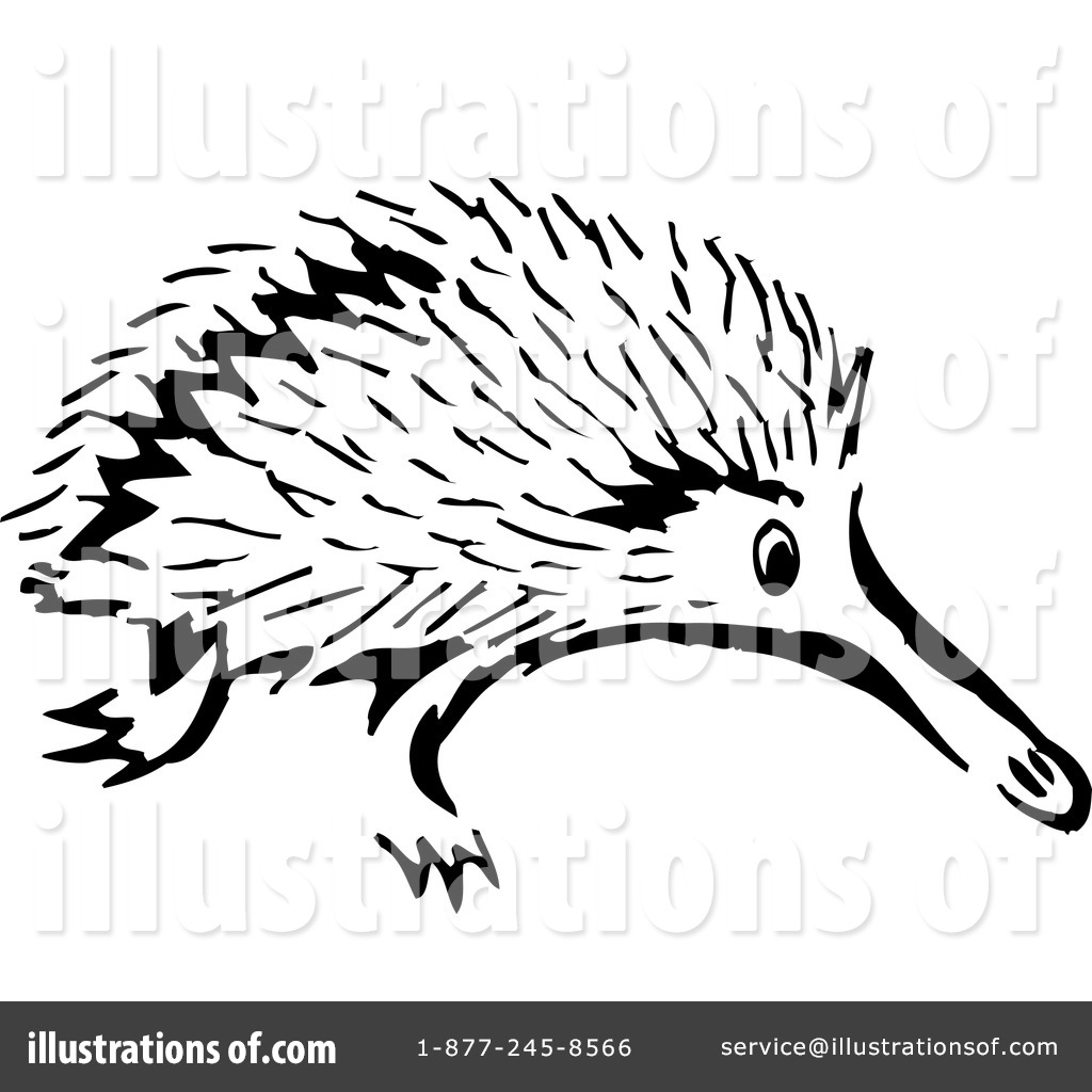 Echidna clipart #15, Download drawings