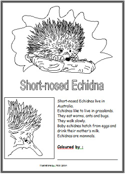 Echidna coloring #17, Download drawings