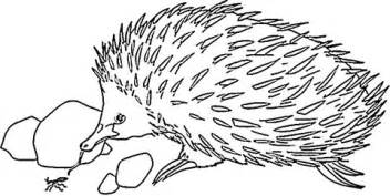 Echidna coloring #19, Download drawings