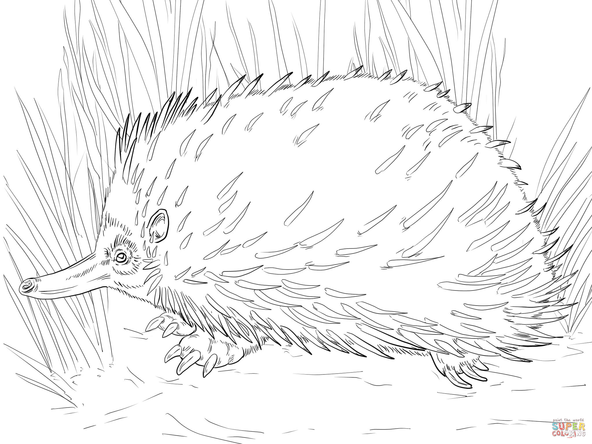 Echidna coloring #2, Download drawings
