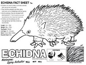 Echidna coloring #15, Download drawings