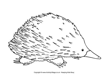 Echidna coloring #18, Download drawings