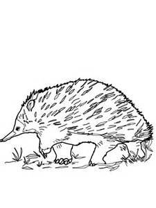 Echidna coloring #13, Download drawings