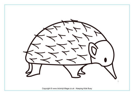 Echidna coloring #10, Download drawings