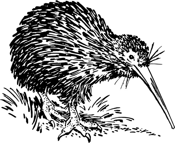 New World Porcupine svg #4, Download drawings