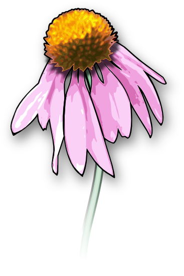 Echinacea clipart #9, Download drawings