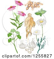 Echinacea clipart #15, Download drawings