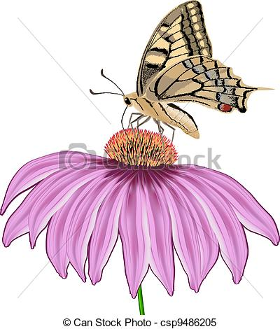 Echinacea clipart #5, Download drawings