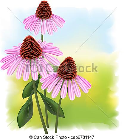 Echinacea clipart #4, Download drawings