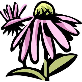 Echinacea clipart #20, Download drawings