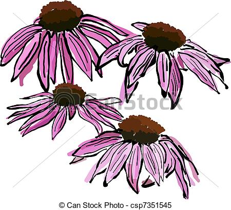 Echinacea clipart #13, Download drawings