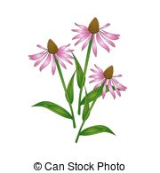 Echinacea clipart #18, Download drawings