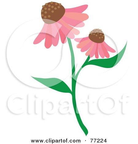 Echinacea clipart #14, Download drawings