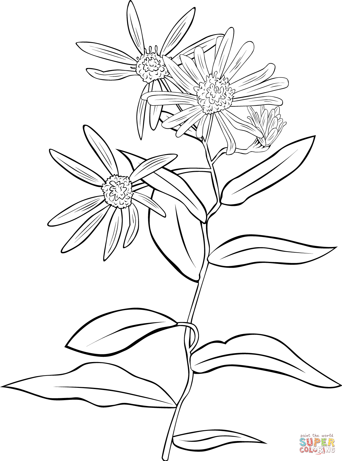 Echinacea coloring #9, Download drawings