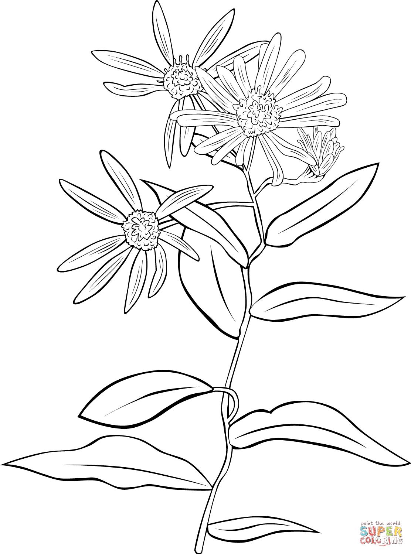 Coneflower coloring #13, Download drawings