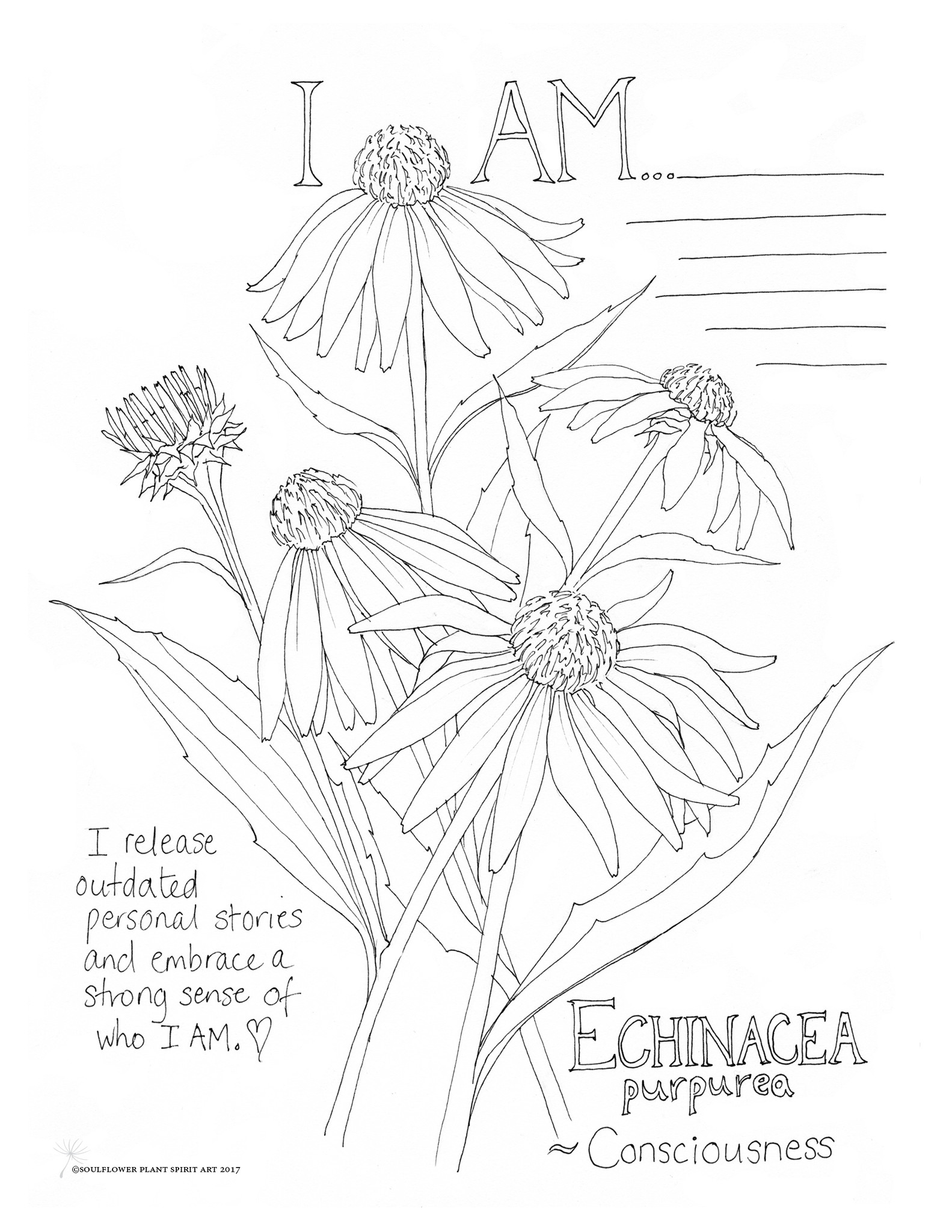 Echinacea coloring #18, Download drawings