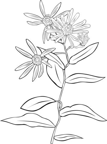 Coneflower coloring #15, Download drawings